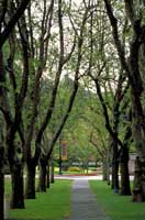 Mlls College