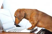 dog on computer looking up ivy league academic index